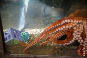 octopus enrichment