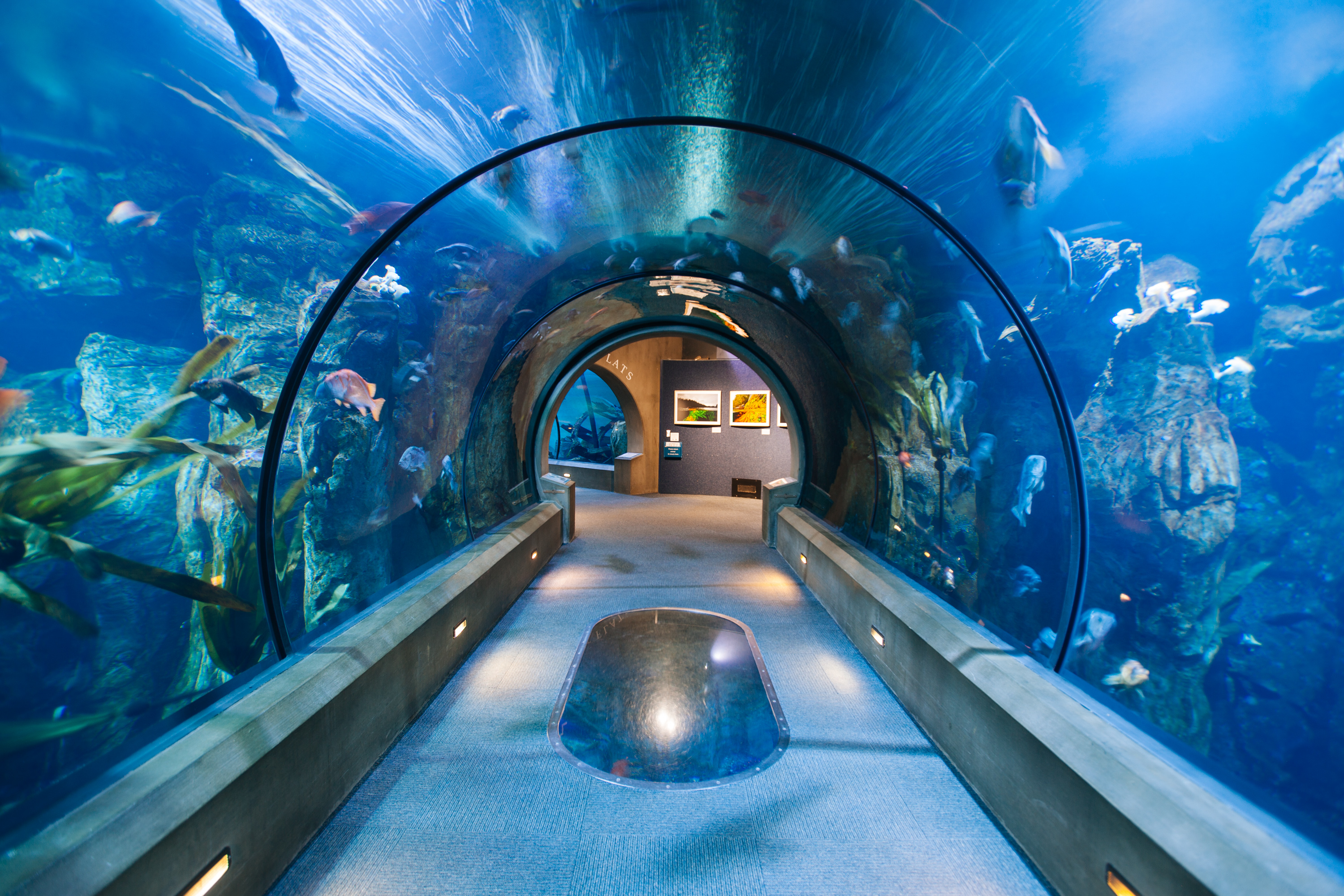 Aquarium To Welcome Lincoln County Hospitality Workers